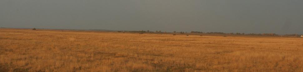 Steppe habitat (Photo: Zoltán Orbán).