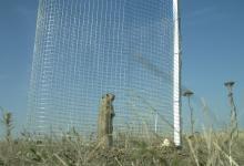 Áttelepített ürge a védőkerítés mögött (fotó: Milvus Csoport).